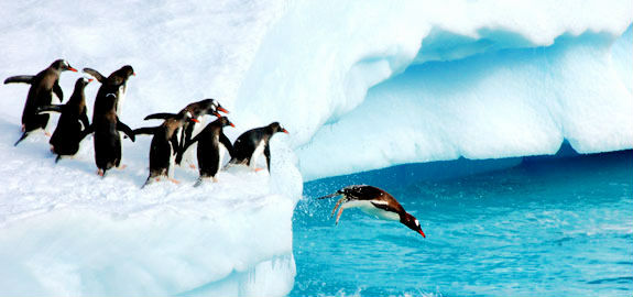 Penguins plunging of ice